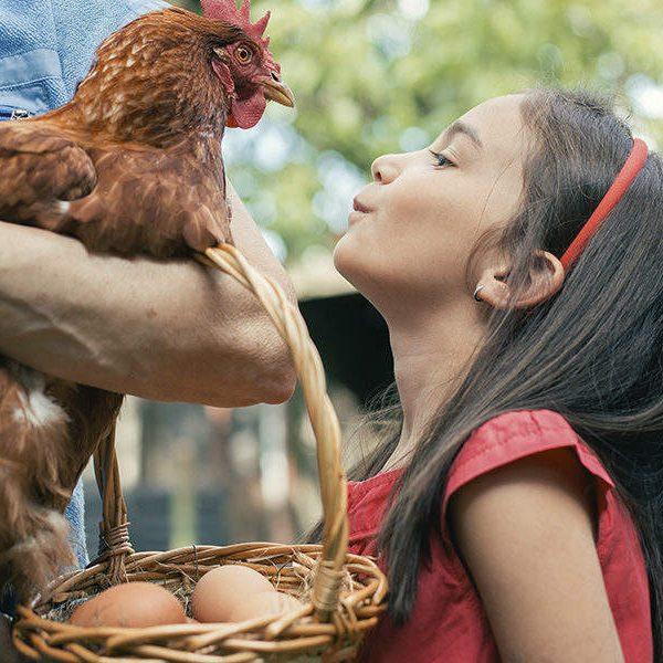 farm-fresh-festival