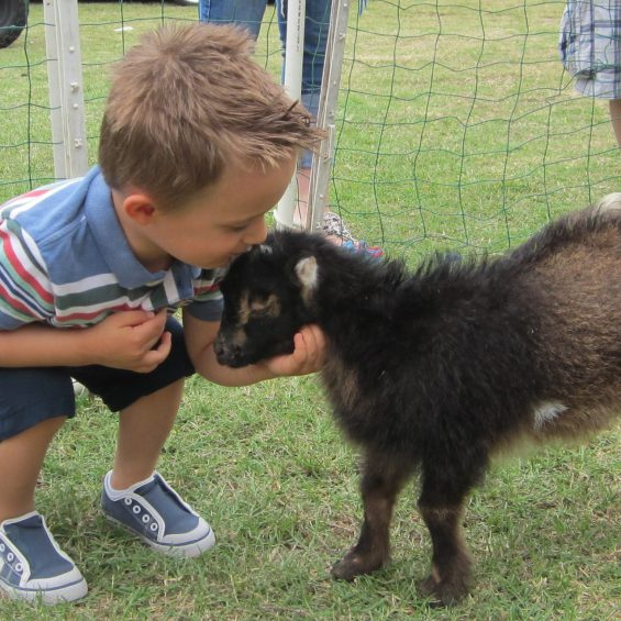 goat.petting.zoo_